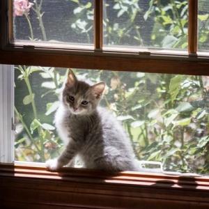 Muanyag ablakot szeretne?